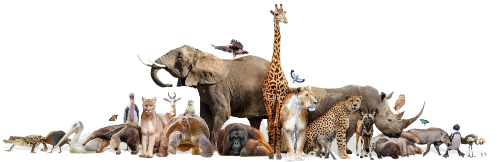Zoo and Wildlife Animals