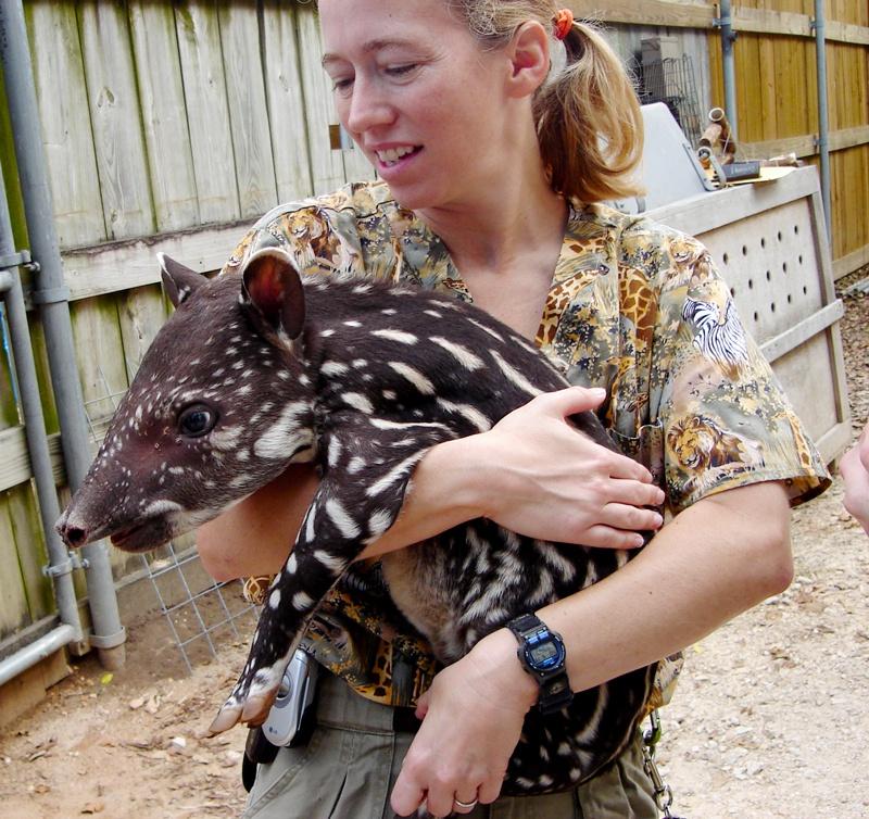 Dr. Lauren Howard with a Tapir