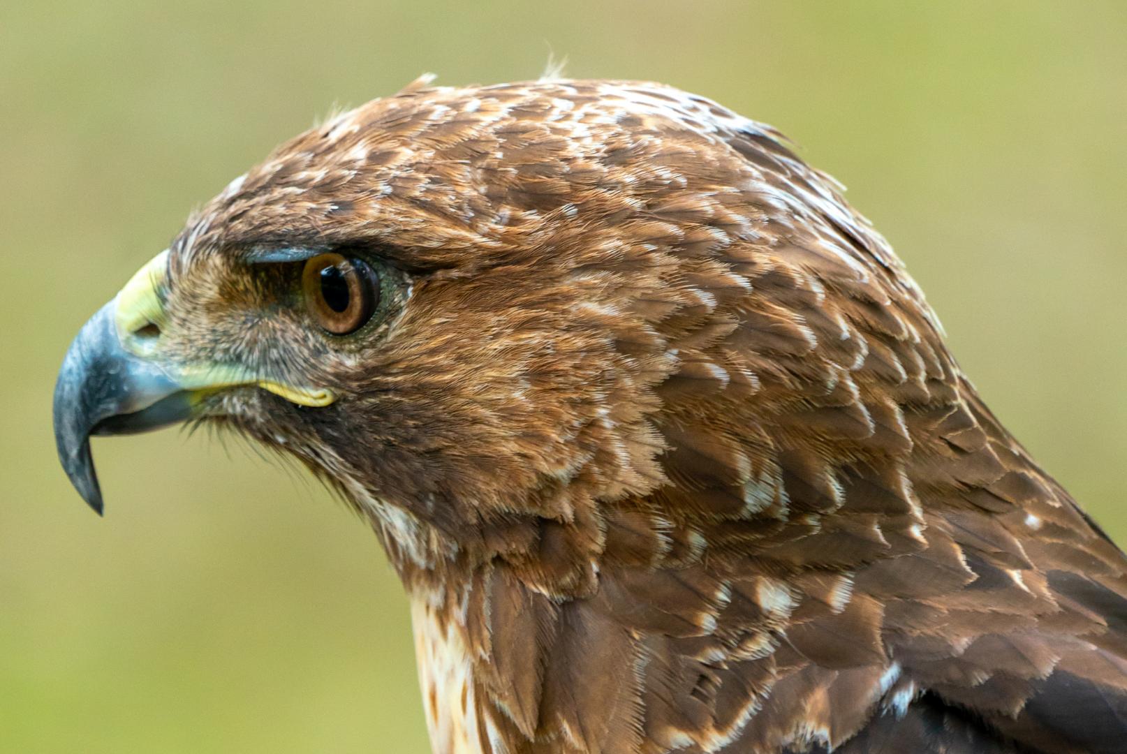 bird website pic
