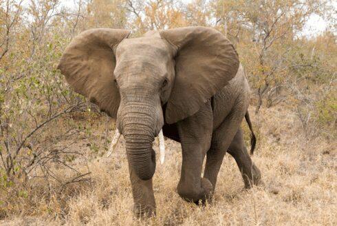 Resized elephant project