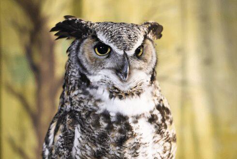 resize owl